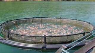 الثروة السمكية: إزالة كافة أشكال التلوث لتوفير بيئة مثالية للأسماك
